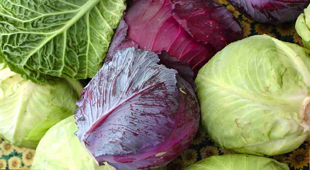 Cabbage-Chemical-Fights-Ovarian-Cancer