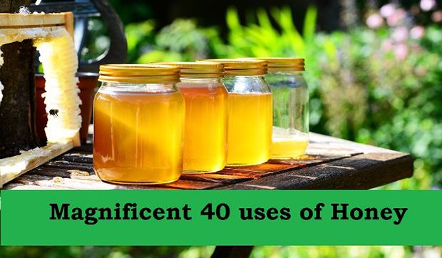 honey-352205_1280