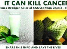 guyabano-cancer