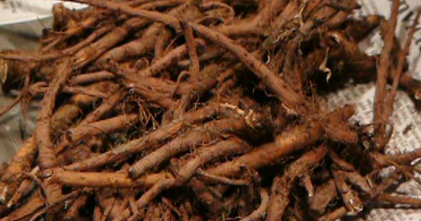 -patient-s-Cancer-Cells-Were-Killed-48-Hours-After-Drinking-This-Powerful-Root