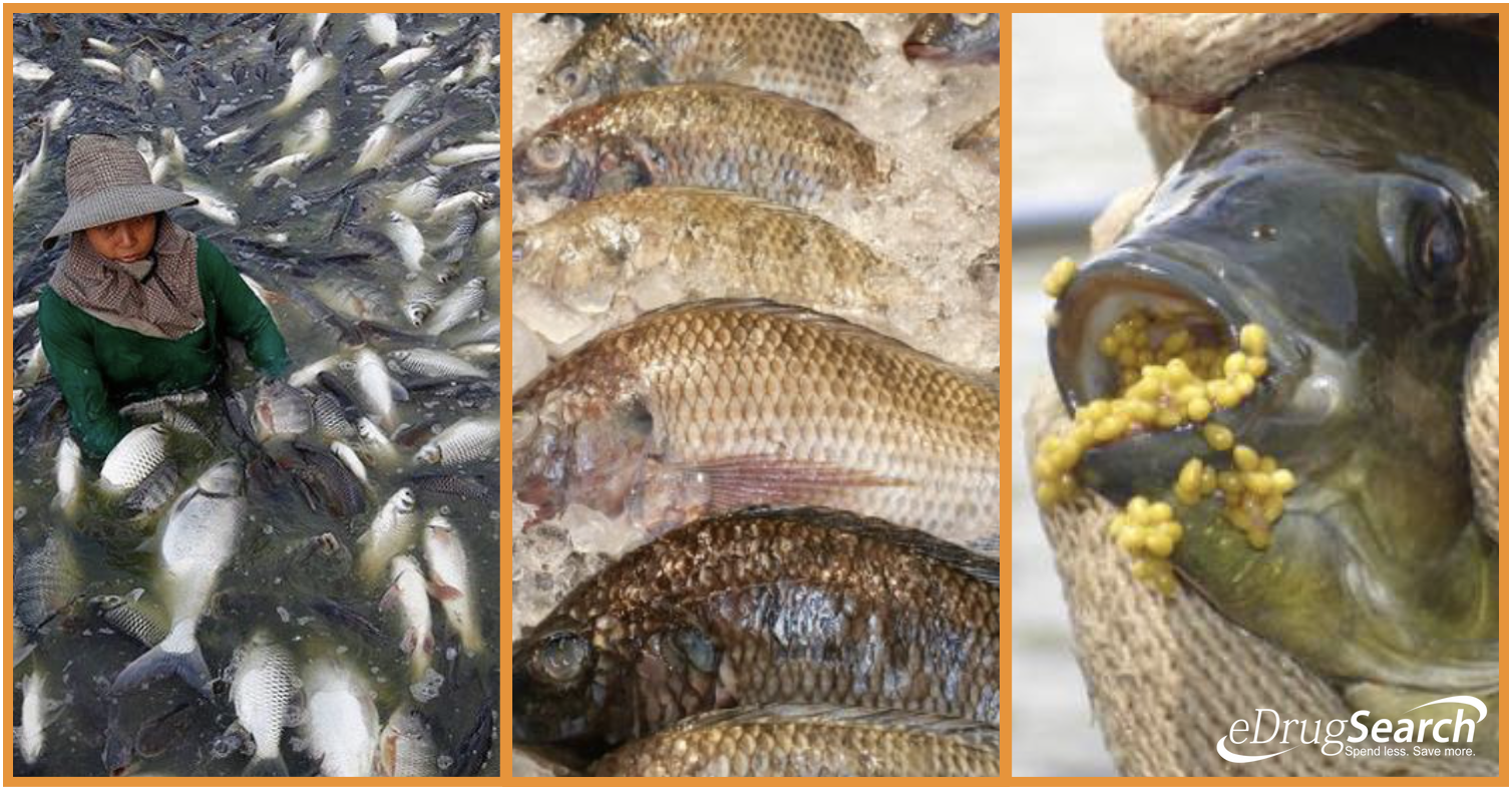 4 Good Reasons Why You Should NEVER Eat Tilapia Again!