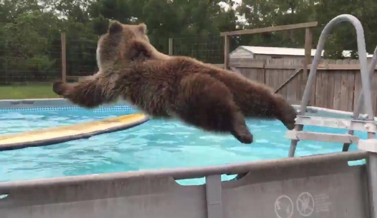 bear-jump2154