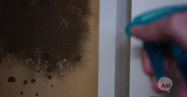 See What She Sprays On The Mold Spot