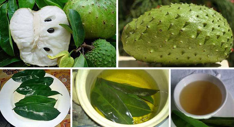 leaves-soursop-1000-times-stronger-killing-cancer-cells-chemotherapy