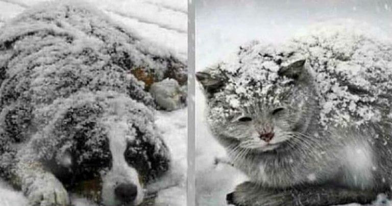 pet-frozen254